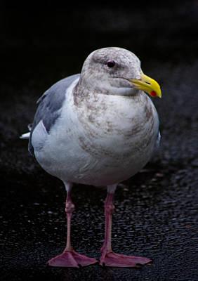 Photograph - Pink Feet Yellow Beak by Adria Trail