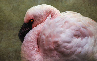 Photograph - Pink Flamingo 2 by Angie Vogel