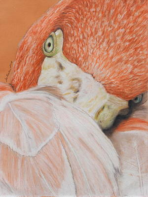 Painting - Pink Flamingo 2 by Jeanne Fischer
