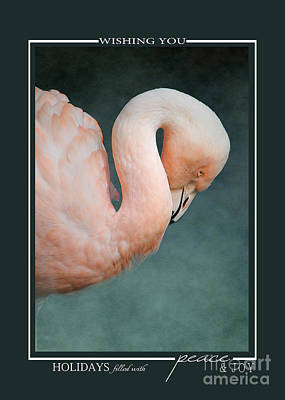 Photograph - Pink Flamingo 2 Tropical Bird Christmas Cards by Jai Johnson