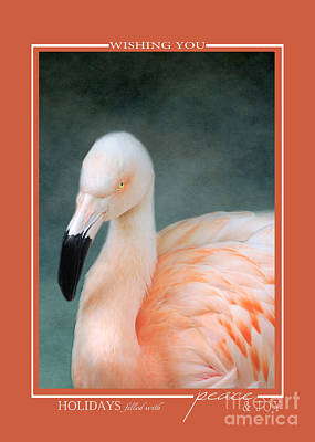 Photograph - Pink Flamingo 3 Tropical Bird Christmas Cards by Jai Johnson
