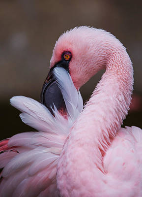 Photograph - Pink Flamingo by Angie Vogel