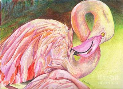 Colored Pencil Drawing - Pink Flamingo by Celia Fedak
