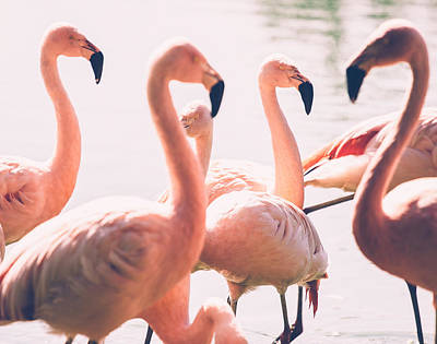 Birds Royalty-Free and Rights-Managed Images - Pink Flamingo Flock by Pati Photography