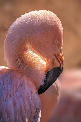 Photograph - Pink Flamingo by Jason Politte