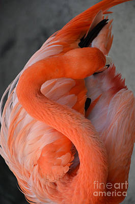 Art Print featuring the photograph Pink Flamingo by Robert Meanor