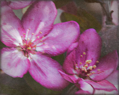 Photograph - Pink Flower Digital Art by Walter Herrit