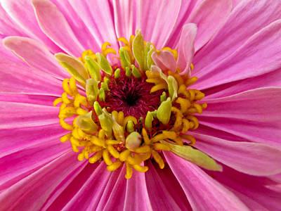 Photograph - Pink Flower by Eva Kondzialkiewicz