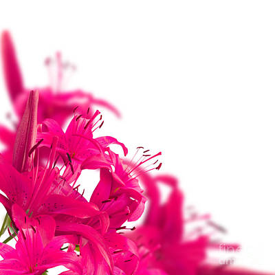 Pink Flower Frames Art Print by Boon Mee