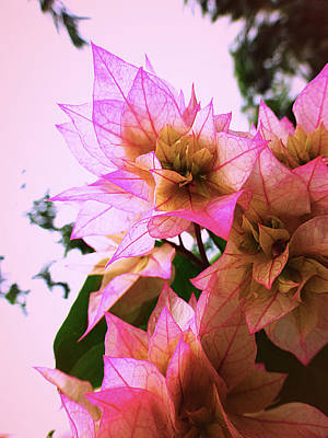 Hanging Mobile Photograph - Pink Flower by Girish J