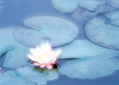 Pink Flower In Pond, Lotus Print by Panoramic Images