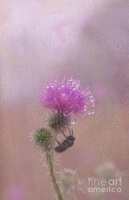 Photograph - Pink Flower In Rain With Bee by Dan Friend