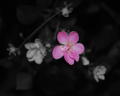 Art Print featuring the photograph Pink Flower  by Maggy Marsh