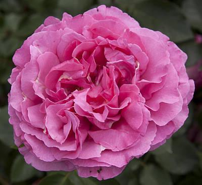 Photograph - Pink Flower by Masami Iida