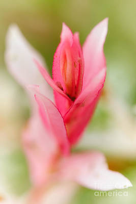 Photograph - Pink Flower by Nick  Biemans