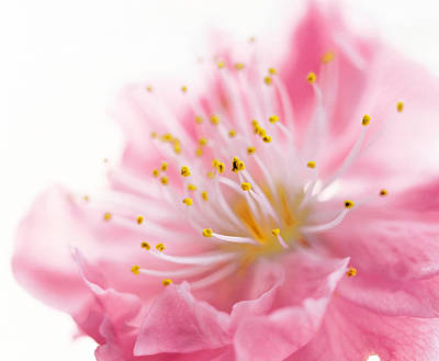 Designs In Nature Photograph - Pink Flower by Panoramic Images