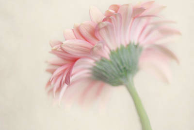 Pink Flower Photography - Pink Nursery Wall Art - Baby Girl Nursery Art - Pale Pink Mint Green Decor Art Print by Amy Tyler