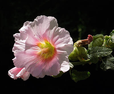Photograph - Pink Flower by Sandra Selle Rodriguez