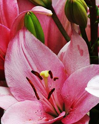 Photograph - Pink Flower Upward Facing by Bill Woodstock