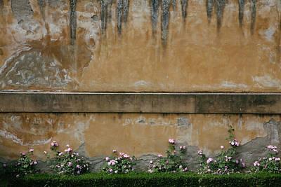 Photograph - Pink Flowers Growing On An Old Wall by Matt Propert