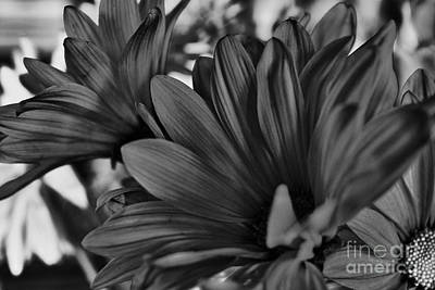 Photograph - Pink Flowers In B-w  by Charles Muhle