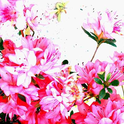 Photograph - Pink Flowers by Marianne Dow
