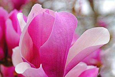 Photograph - Pink Flowers by Mike Murdock
