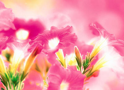 Pink Flowers Print by Panoramic Images