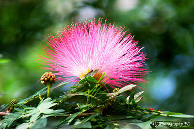 Photograph - Pink Fluff by Marty Gayler