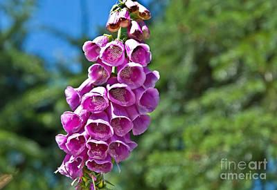 Photograph - Pink Foxglove Flower by Valerie Garner