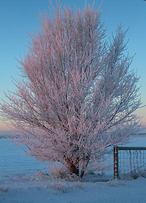 Photograph - Pink Frost by Trent Mallett