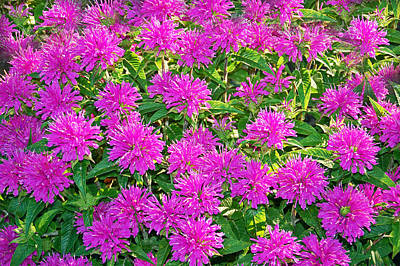 Photograph - Pink Garden Flowers by Aimee L Maher Photography and Art Visit ALMGallerydotcom