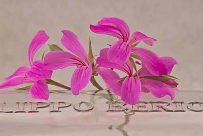 Pink Geraniums Photograph - Pink Geranium Blossoms - Macro by Sandra Foster