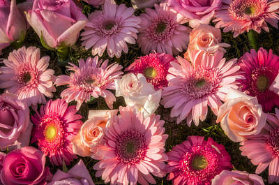 Photograph - Pink Gerber Daisy And Roses Background by Connie Cooper-Edwards