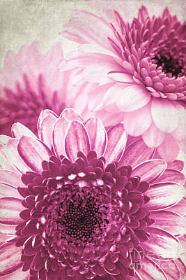 Gerbera Mixed Media - Pink Gerbera by Angela Doelling AD DESIGN Photo and PhotoArt