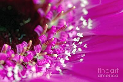 Photograph - Pink Gerbera Daisy 2 by Sharon Talson