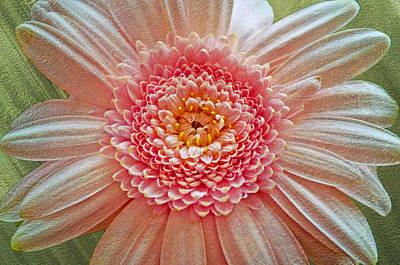 Pink Gerbera Textured Art Print