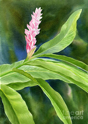 Pink Flower Painting - Pink Ginger Flower by Sharon Freeman