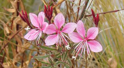 Photograph - Pink Guara by Bonnie Muir