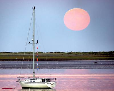 Photograph - Pink Harvest Moon by Janice Drew