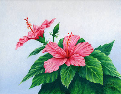 Conservatory Drawing - Pink Hibiscus by Wolf Daughter