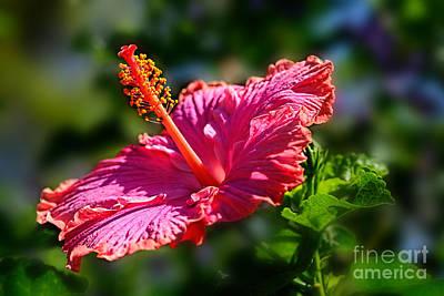 Pink Hibiscus By Kaye Menner Print by Kaye Menner