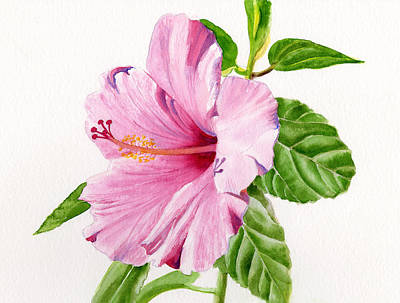Hibiscus Painting - Pink Hibiscus With White Background by Sharon Freeman