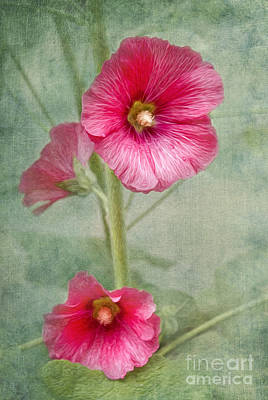 Photograph - Pink Hollyhocks by Lena Auxier