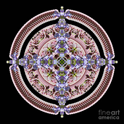 Wall Art - Photograph - Pink Hopniss Salver by Karen Jordan Allen