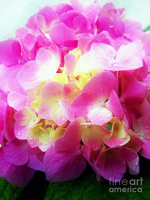 Photograph - Pink Hortensia After Rain by Nina Ficur Feenan