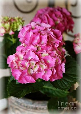 Flower Planter Photograph - Pink Hydrangea by Carol Groenen