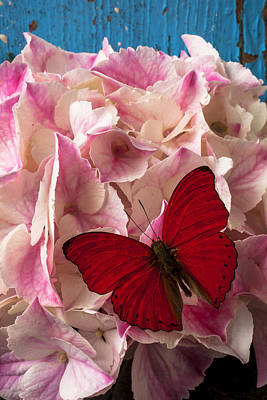 Pink Hydrangea With Red Butterfly Art Print by Garry Gay