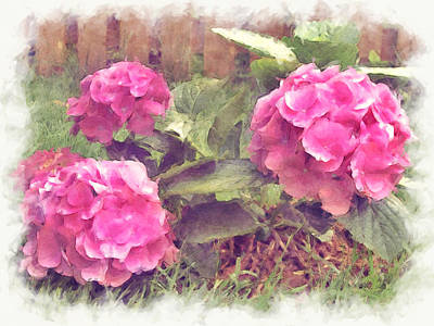 Photograph - Pink Hydrangeas by Paulette B Wright