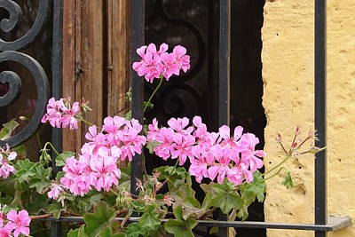 Art Print featuring the photograph Pink In My Window by Lew Davis